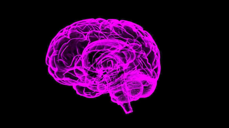 Mon petit cerveau  11.04.20